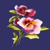 Flores dos pansies em uma obscuridade - fundo azul ilustração do vetor