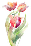 Flores dos Tulips Imagem de Stock Royalty Free