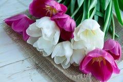 Flores dos tulpes da mola no fundo de madeira branco Fotografia de Stock