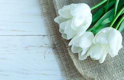 Flores dos tulpes da mola no fundo de madeira branco Fotos de Stock