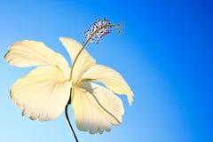 Flores dos vagabundos dos amigos em Tailândia. fotografia de stock