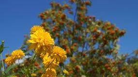 Flores douradas Fotos de Stock