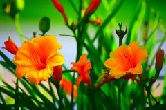 Flores douradas Imagens de Stock