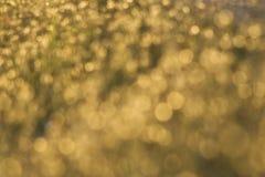 Flores douradas da grama fotografia de stock royalty free
