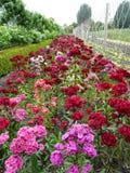 Flores dulces de Guillermo Fotografía de archivo