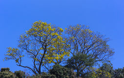 Flores dulces de la primavera Imagenes de archivo
