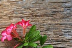 Flores dulces en fondo de madera rústico Foto de archivo libre de regalías