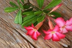 Flores dulces en fondo de madera rústico Fotografía de archivo libre de regalías
