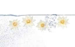 Flores e água Fotografia de Stock Royalty Free