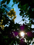 Flores e árvore sombreadas contra o Sun Imagens de Stock