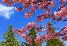 Flores e árvores Fotos de Stock