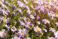Flores e abelha cor-de-rosa Fotos de Stock Royalty Free