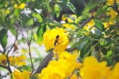 Flores e abelhas amarelas fotos de stock royalty free