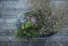Flores e arbustos em uma bandeja da lata de cima nas tábuas corridas de madeira Imagens de Stock