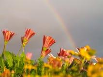 Flores e arco-íris Foto de Stock Royalty Free
