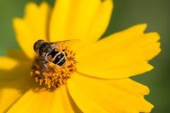 Flores e as abelhas imagem de stock