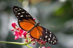 Flores e asas Fotografia de Stock