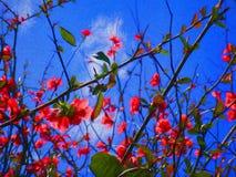 Flores e azul Imagem de Stock Royalty Free