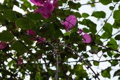 Flores e Barb Wire, Gisenyi, Ruanda foto de stock