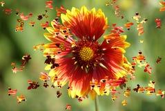Flores e borboletas ilustração royalty free