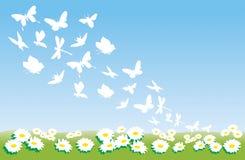 Flores e borboletas do verão Fotografia de Stock Royalty Free