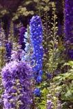 Flores e botões do jardim Fotos de Stock Royalty Free