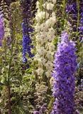 Flores e botões do jardim Imagem de Stock Royalty Free