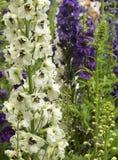 Flores e botões do jardim Imagens de Stock Royalty Free