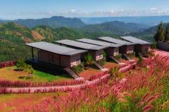 Flores e bungalow cor-de-rosa com o marco do público do céu azul Foto de Stock Royalty Free
