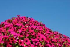 Flores e céu Foto de Stock Royalty Free