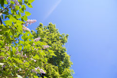 Flores e céu Imagens de Stock Royalty Free
