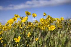 Flores e céu Fotografia de Stock Royalty Free