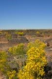 Flores e céu amarelos do deserto Imagem de Stock