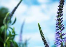 Flores e céu azuis Imagem de Stock Royalty Free