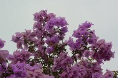 Flores e céu azul Fotografia de Stock
