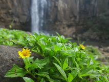 Flores e cachoeiras Fotografia de Stock Royalty Free
