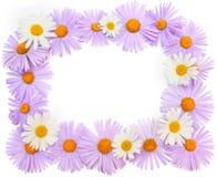 Flores e camomilas roxas no fundo branco Quadro, placa, Fotografia de Stock