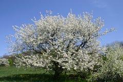 Flores e campo. Imagens de Stock Royalty Free