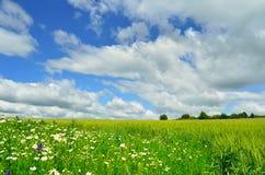 Flores e campo Imagem de Stock Royalty Free