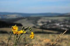 Flores e campo fotografia de stock
