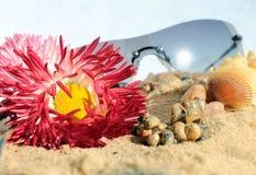 Flores e caracóis dos óculos de sol na areia Foto de Stock