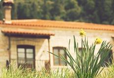 Flores e casa Imagem de Stock Royalty Free