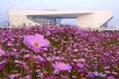 Flores e edifício moderno imagens de stock