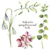 Flores e ervas da mola da aquarela Grupo floral com snowdrops, flor de cerejeira, ramos das ervas isolados no branco ilustração royalty free