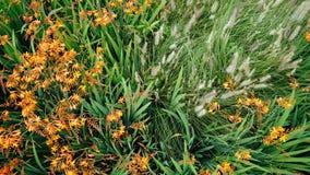 Flores e ervas daninhas alaranjadas imagens de stock