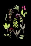 Flores e ervas do verão Fotografia de Stock Royalty Free