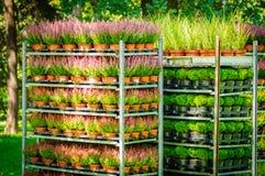 Flores e ervas do verão em uns potenciômetros Flores e ervas do verão em uns potenciômetros plásticos em cremalheiras foto de stock