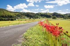 Flores e estrada de exploração agrícola Imagem de Stock Royalty Free