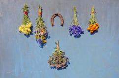 Flores e ferradura médicas frescas do grupo várias foto de stock