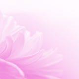 Flores e foco macio Fotos de Stock Royalty Free